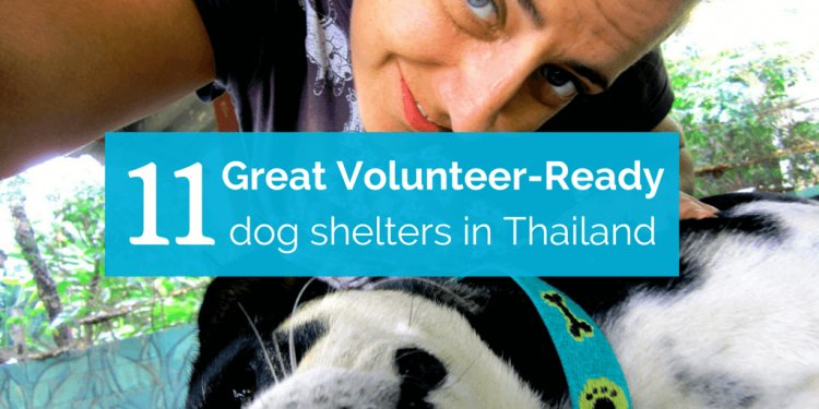 11 Great Volunteer-Ready Dog