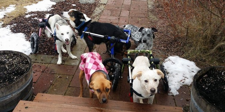 Dogs With Disabilities Get New