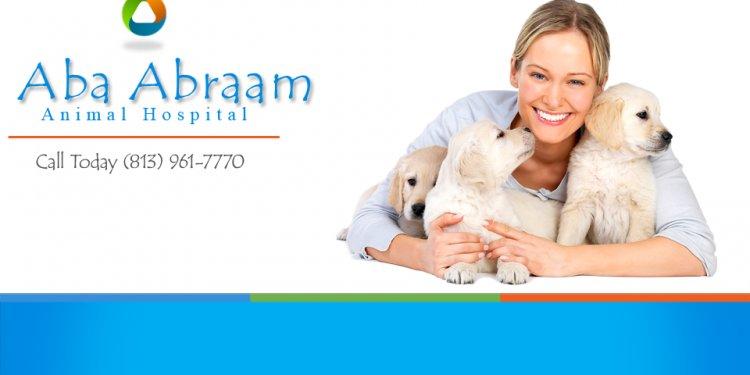 Abraam Animal Hospital Logo