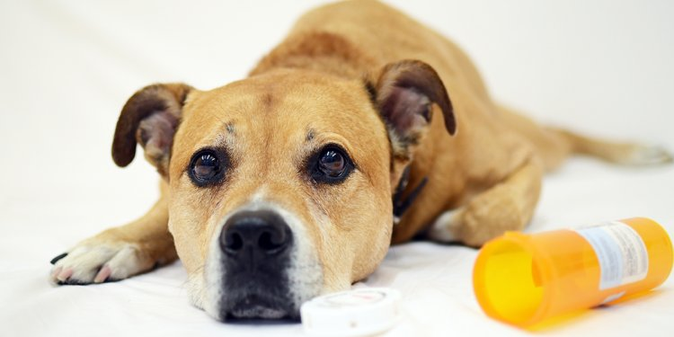 Adopt A Citrus County Animal