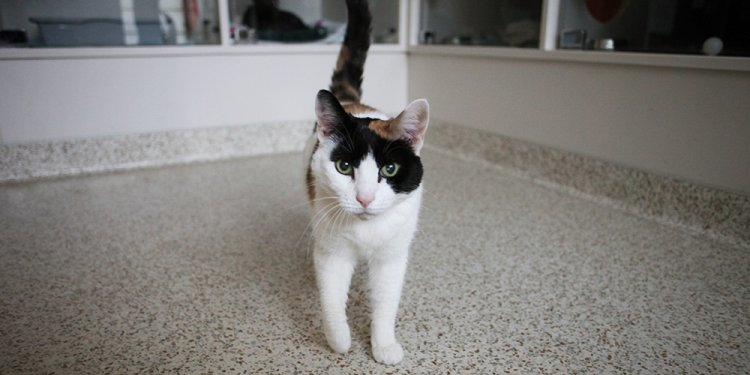 Adopt a pet nyc free