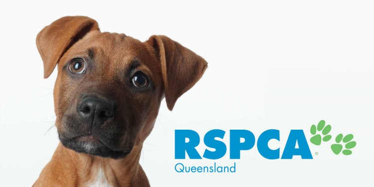 Adopt a Pet | RSPCA Queensland
