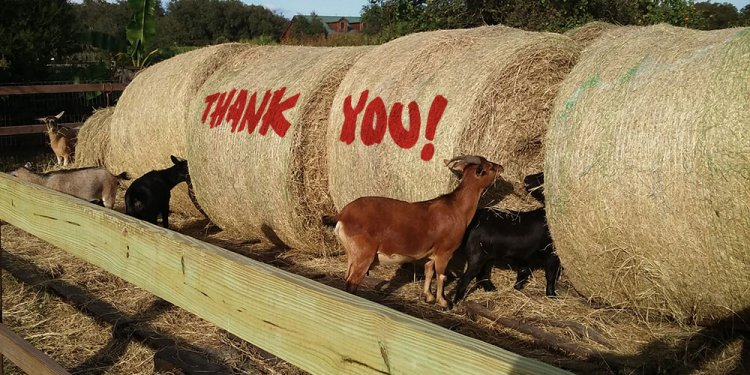Hay-drive-thank-you