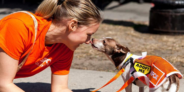 ASPCA | Official Site for the