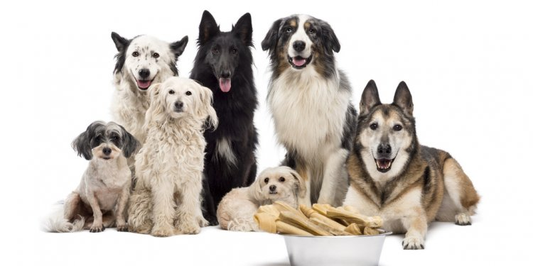 Group of dogs with a bowl full
