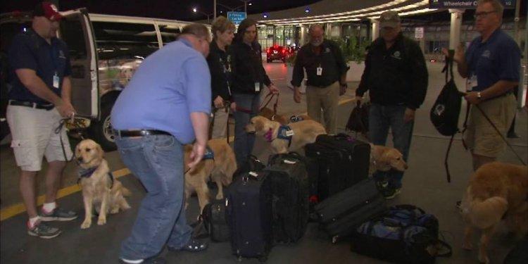 Comfort dogs at Orlando