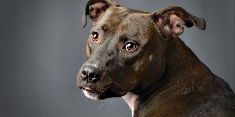 Dog Rescue Cincinnati