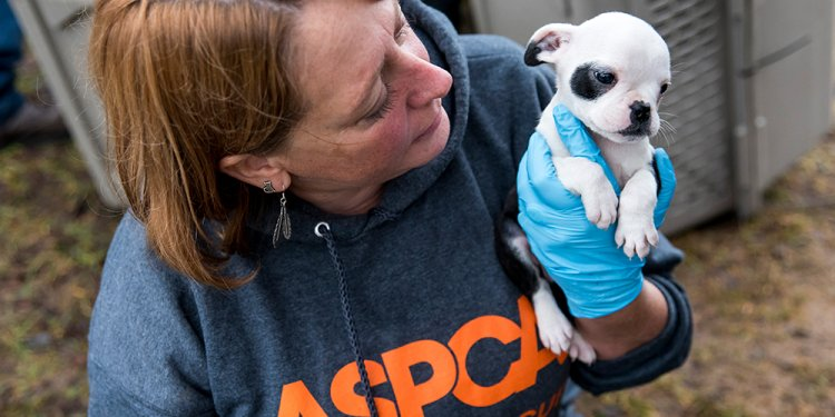 In Rescuing 50 Dogs from