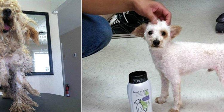 New face to pet adoption