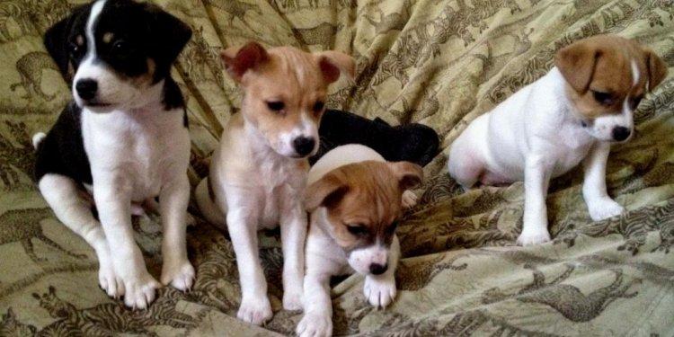 4 Puppies