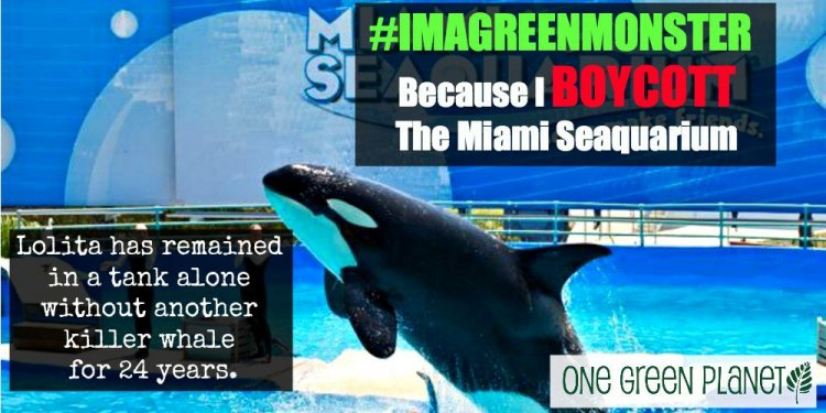 The Miami Seaquarium: Cruel