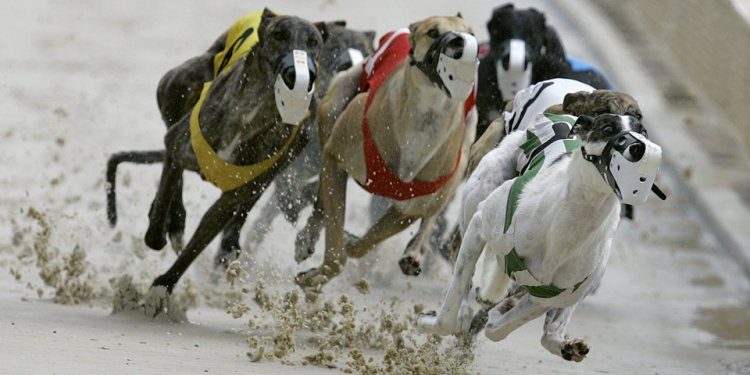 To report greyhound deaths
