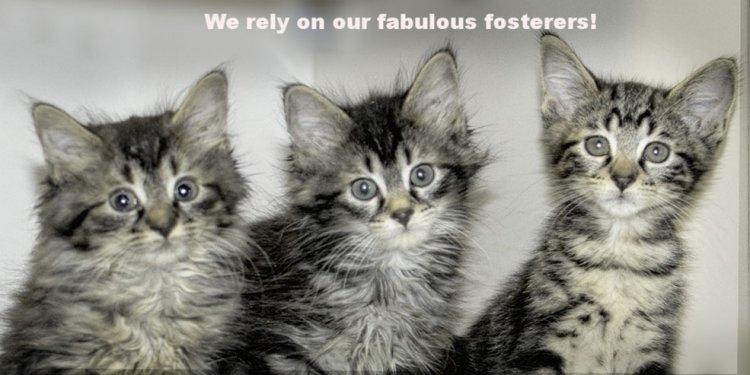 Kittenswelcomeslideshow.jpg