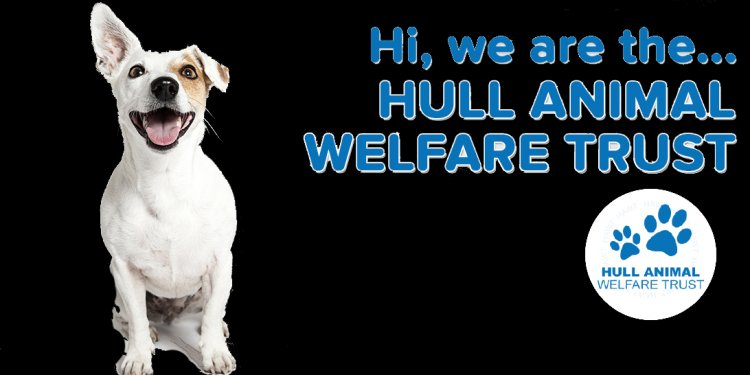 RT @RSPCAHull: The weathers