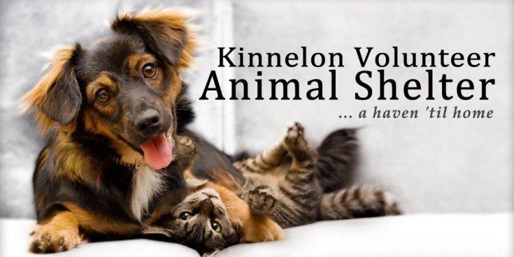 Volunteer Animal Shelter