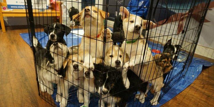BC Humane Society is saving