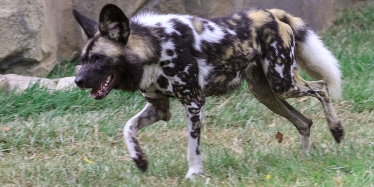 Painted Dog Valley Now Open at