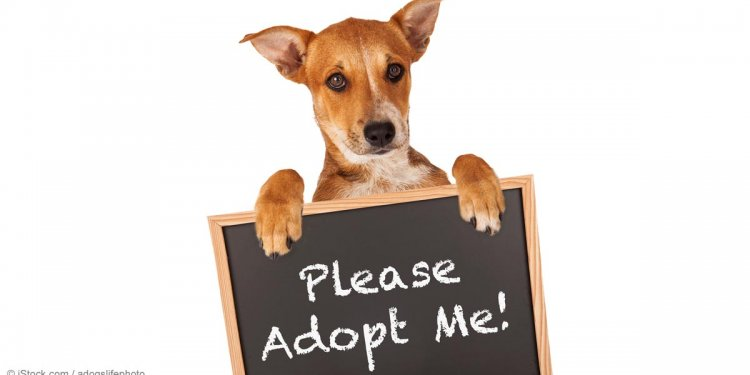 Pet Adoption | Will These Pets