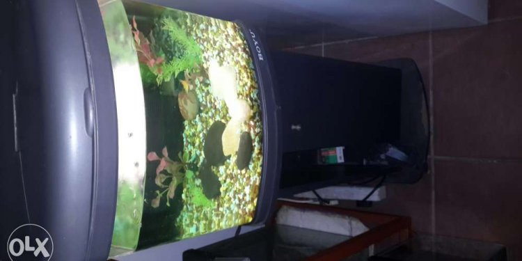 Boyu fish tank small 40 x 40 x