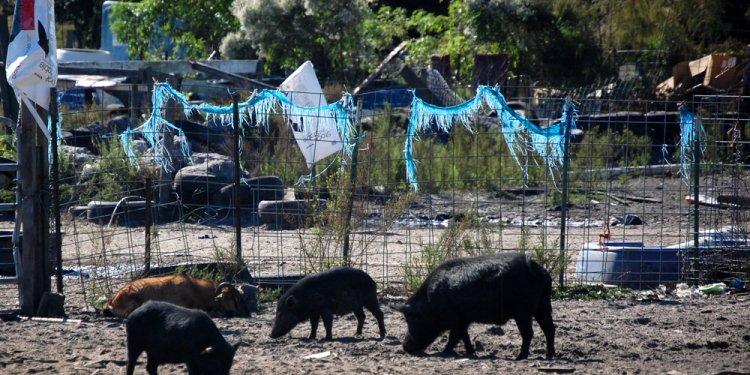 Pigs pig sanctuary bunnell