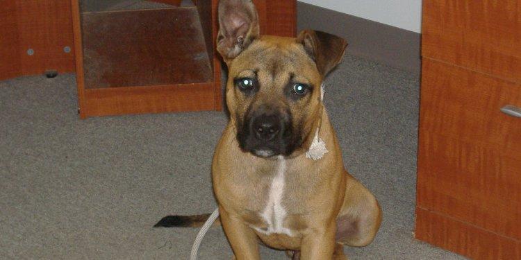 Plain Brown Dog: Second Chance