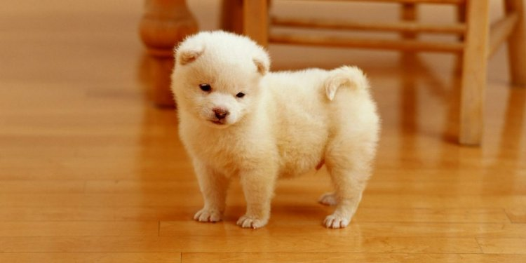 Babby Puppys