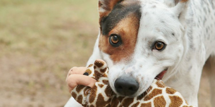 Report Animal Abuse