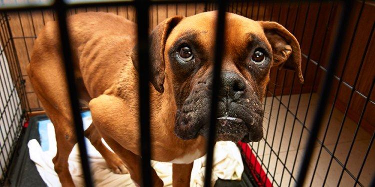 Where to Report Animal Cruelty