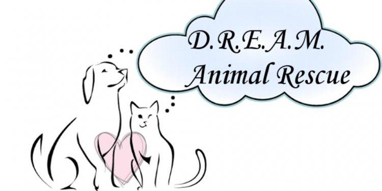 D.R.E.A.M. Animal Rescue DREAM