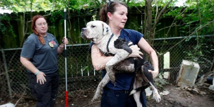 Roanoke animal shelter looking