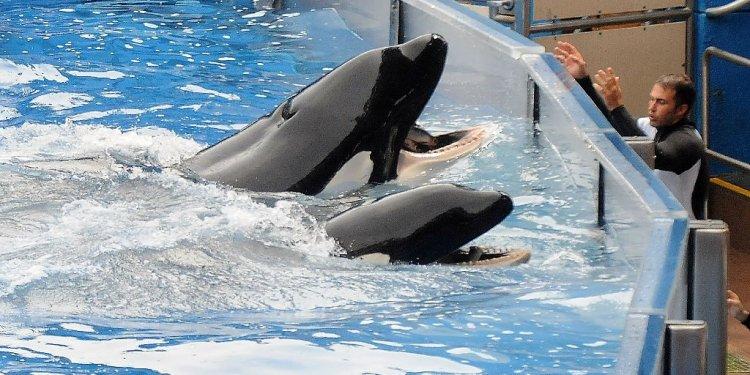SeaWorld to stop breeding