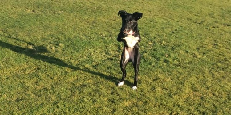 SEE IT: UK dog with 2 legs
