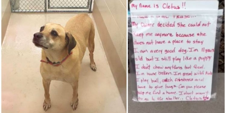 Senior Dog Is Abandoned In A