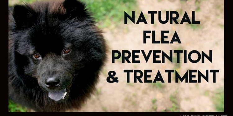 Natural Flea Treatment For