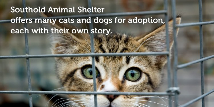 Southold Animal Shelter