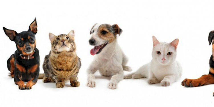 Adopt a shelter cat or dog