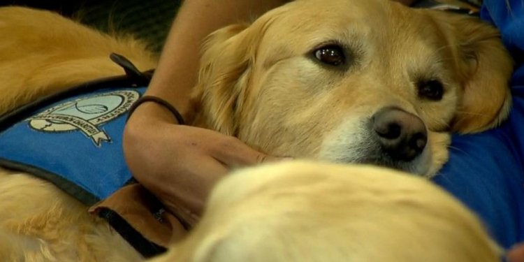 Therapy Dogs Surprise Staff at