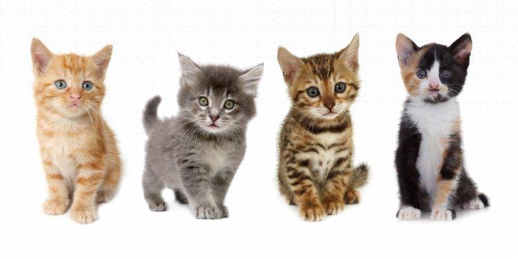 UberKittens Delivers Kittens