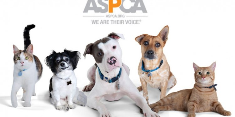 ASPCA s Love A Pet Adoption