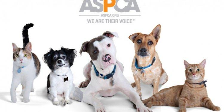 ASPCA s Love A Pet Adoption
