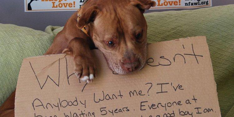Gets New York shelter dog