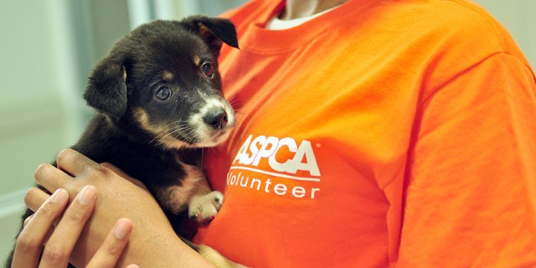 The ASPCA Adoption Center