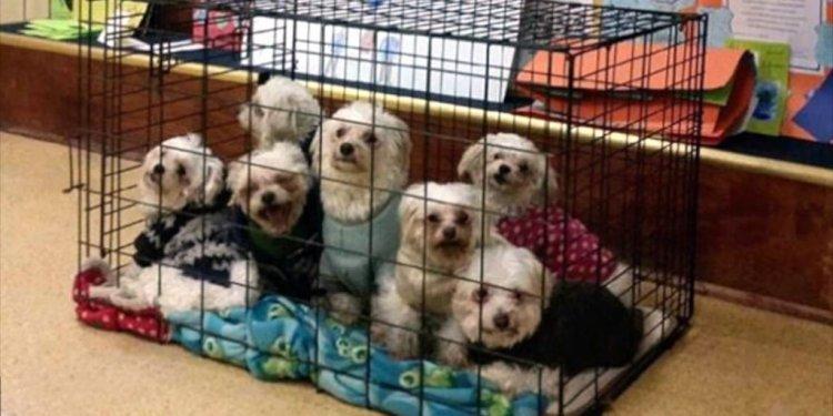 Wonderful Small Dog Rescue