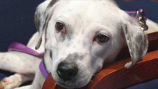 Animal Welfare officers said they recently launched an investigation after receiving reports of a hurt, starving dog in Southeast Oklahoma City.
