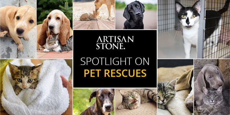 Pet Rescue Shelters