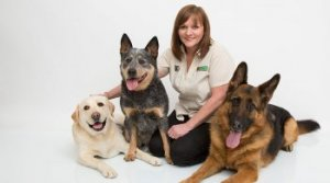 Bark Busters Home Dog Training Services