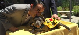 Councilman Ash Kalra announced his plan for a no-kill shelter alongside Peekaboo, a disabled pit bull.