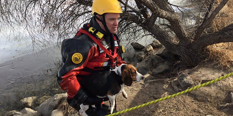 Beagle Rescue long island
