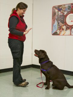 dog training classes in Boston's South End