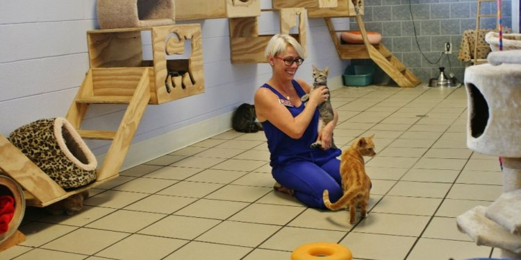 Animal Shelters in Fort Myers FL